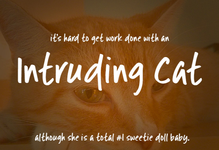 Descarga-fuentes-gratis-Intruding-cat-font.